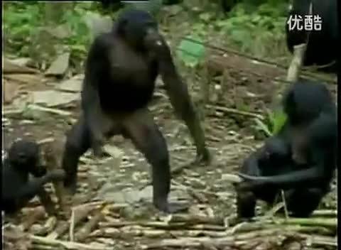 动物世界搞笑吐槽性行为繁殖杂交交配实录
