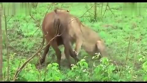 人与自然动物世界_视频在线观看-爱奇艺搜索