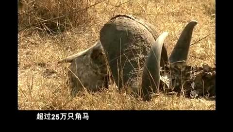 非洲动物大迁徙_视频在线观看-爱奇艺搜索