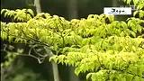 韩国济州岛賭場中介洗碼【友利】西归浦自然休养林