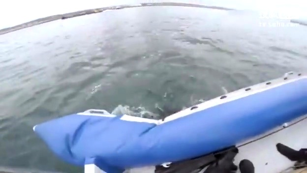 大白鲨高清下载_大白鲨百度影音【免费电影完整版】