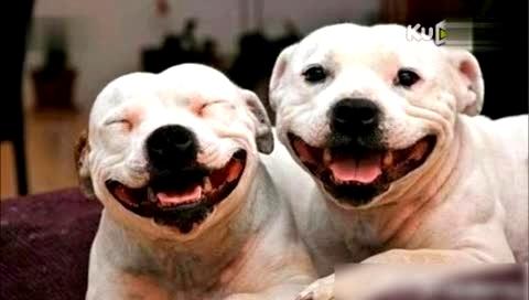 可爱狗狗搞笑