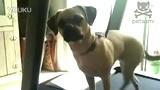 狗狗玩跑步机 太极全讯网
