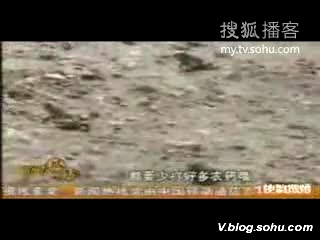 视频:四川绵竹地震前三天数十万蟾蜍异动_新闻_腾讯网