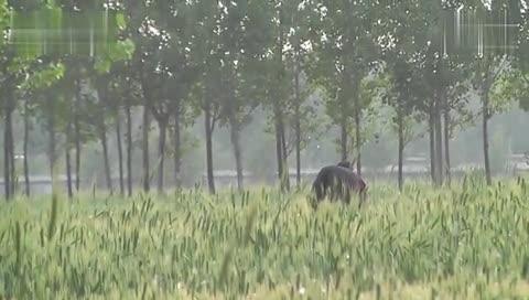 阳谷小树林小情侣电动车玩车震