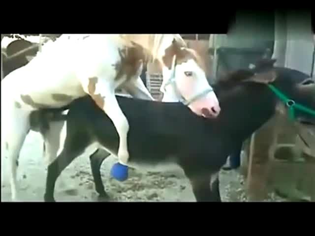 观看_动物交配 马长颈鹿交配-免费在线观看-360影视