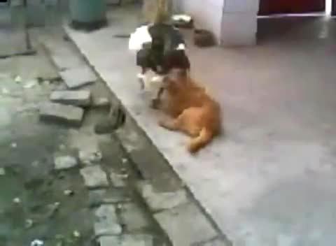 人与狗做爱网址_狗与人的做交好